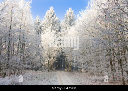 Lonely trail through a snowy forest with the sunlight shining at the trees - Stock Photo