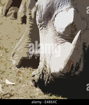 An artistic image of a white rhino with a sharp horn that looks like it is about to charge. Head to the ground, - Stock Photo