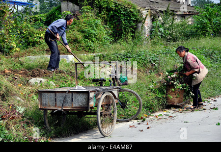 PENGZHOU, CHINA: Farmer digging up sweet potato vines with his wife - Stock Photo