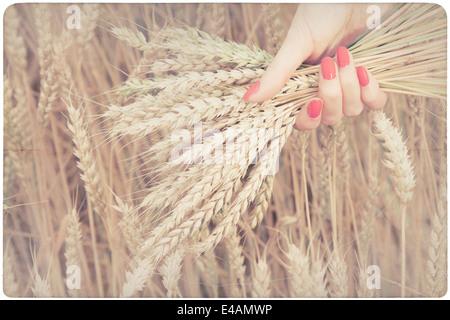 Frau hält einige Mais-spikes - Stockfoto