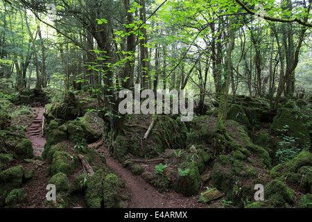 Dating forest of dean