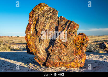 Petrified wood on Giant Logs Trail, Petrified Forest National Park, Colorado Plateau, Arizona, USA - Stock Photo