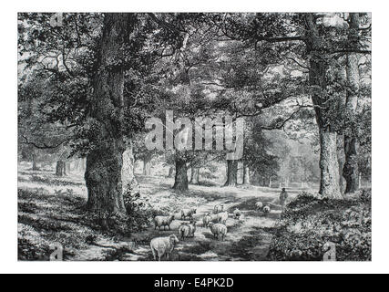 In Sherwood Forest Illustration from 'The British isles - Cassell Petter & Galpin Part 6 Picturesque Europe. Picturesque - Stock Photo