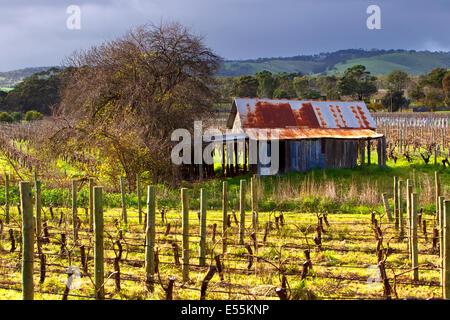 Weingut alte rostige Zinn vergossen Wolken Reben McLaren Wohnung Süd Australien Fleurieu Peninsula Sonnentag Wellblech - Stockfoto