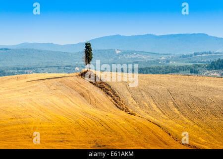 lonely cypress on a hill near Asciano in Crete Senesi, Tuscany, Italy - Stock Photo