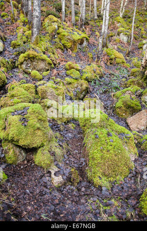 Moss covered rocks at the Burn O' Vat at Dinnet in Aberdeenshire,Scotland. - Stockfoto