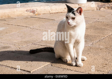 White and black feral cat on the quayside, Saint Julian's Bay, Malta. - Stock Photo