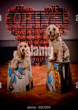 Dogs Joe and Jarvis posing in stools with a heart shaped neon sign at a specialist shop Oakley's in East Sussex. - Stock Photo