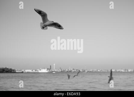 Seagulls flying over Tokyo Bay - Stock Photo