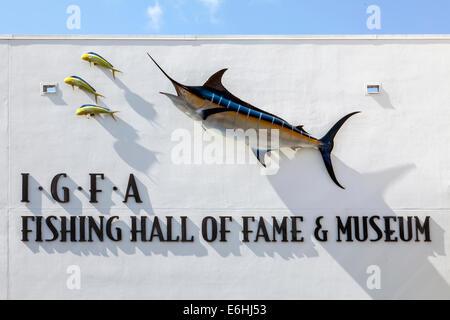 Blue Marlin (Makaira nigricans) and Dolphinfish (Coryphaena hippurus) mounted on stone wall, IGFA Fishing Hall Of - Stock Photo