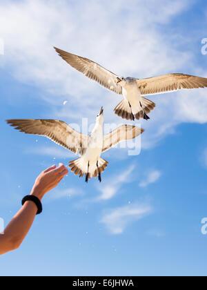 Mädchen Handanlage Möwen vor dem Hintergrund des blauen Himmels - Stockfoto
