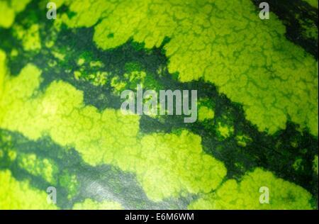 Water melon - Stock Photo