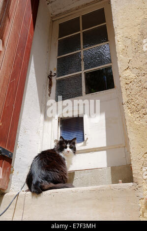 Domestic cat at door stock photo royalty free image for Domestic front doors