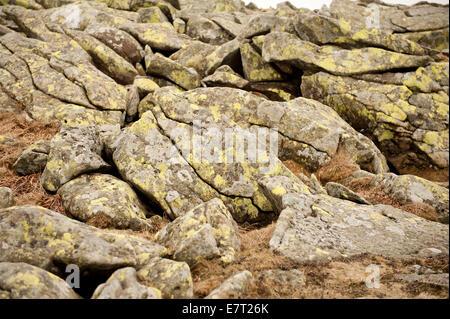 Lichen grow on stones slabs in Babia Gora National Park - Stock Photo