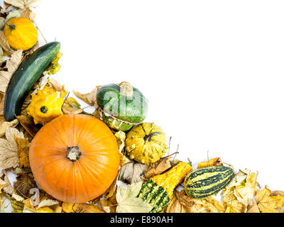 Composition of summer squashes, pumpkins and dead leaves with white space - Stock Photo