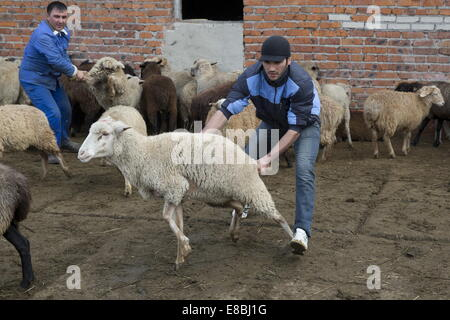 sheep ranch muslim single men What do you call a nebraskan farmer with a sheep under each arm  marie grabs a turnip, and alexis grabs a single grape  family ranch two sisters, .