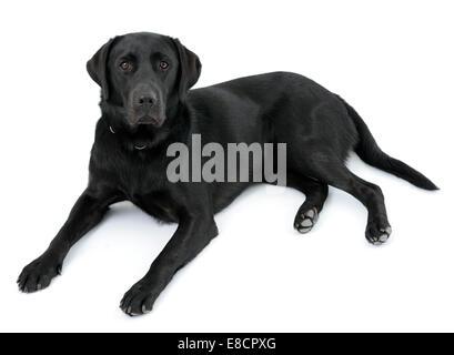 Black dog lying on back - photo#2
