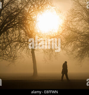 Silhouette of a person walking through park at dawn, Berkshire, England, UK - Stock Photo