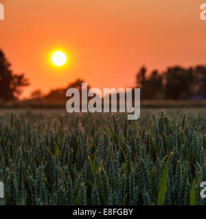 Sunset over crops - Stock Photo