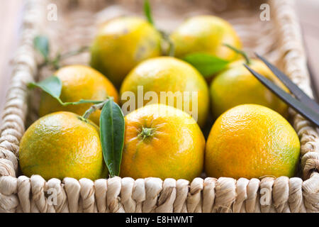 clementines in woven basket with scissors - Stock Photo