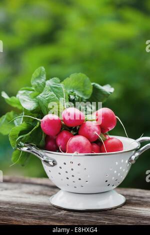Fresh raddish in a dish in a garden - Stock Photo