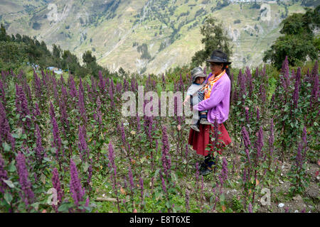 Mother in traditional dress with child in a quinoa field (Chenopodium quinoa), Chuquis, Huanuco Province, Peru - Stock Photo