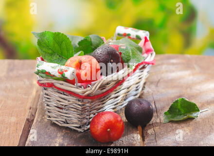 Freshly picked red and purple damson plums in a wicker basket on an old wooden tables outdoors - Stock Photo
