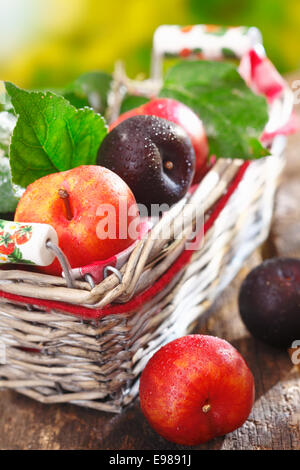 Freshly picked ripe damson and red plums in a rustic wicker basket outdoors on an old wooden tabletop - Stock Photo