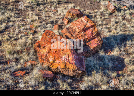 Petrified wood on Long Logs Trail, Petrified Forest National Park, Colorado Plateau, Arizona, USA - Stock Photo
