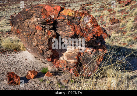 Petrified wood on Long Logs Trail, Petrified Forest National Park, Colorado Plateau, Arizona, USA - Stock Photo