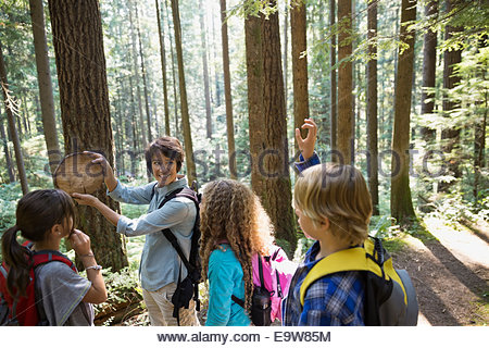 Teacher showing students tree ring in woods - Stockfoto