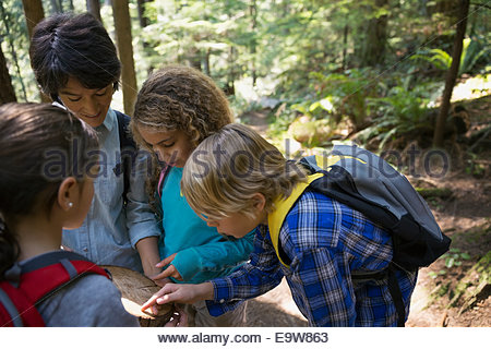 Teacher and students examining tree ring in woods - Stockfoto