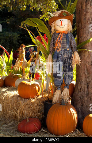 Halloween pumpkin orange dressed straw doll happy corn pumpkins garden on a sunny fun day colorful scene blue sky - Stock Photo