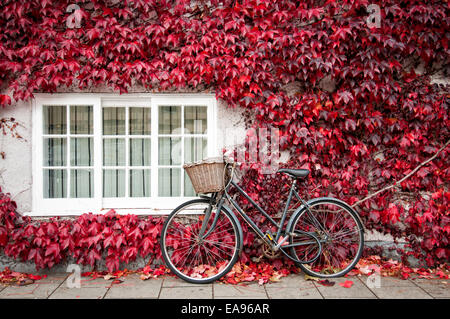 bicycle leaning against an ivy covered building in Oxford England in autumn - Stock Photo