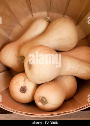 Acorn Squash In basket at farmer's Market - Stock Photo