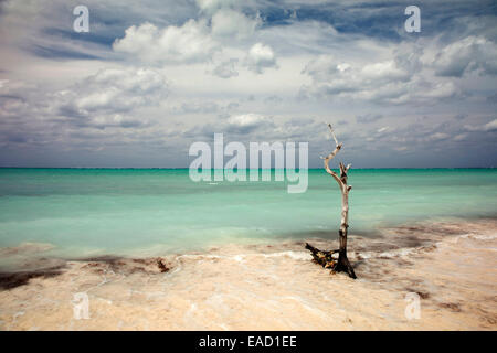 Beach, Cayo Levisa, Pinar del Río Province, Cuba - Stock Photo
