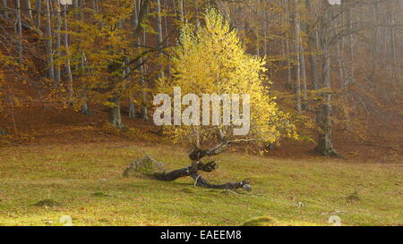 New branches growing from a death tree. - Stock Photo