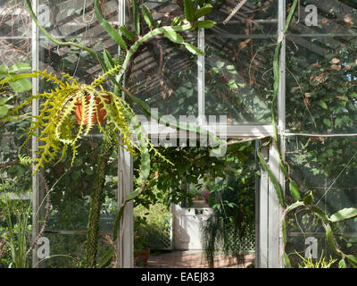 Succulents hanging in greenhouse - Stock Photo