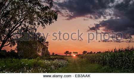 USA, New Jersey, Monmouth, Freehold, Sunset over cornfield - Stock Photo