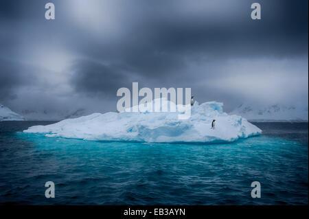 Antarctica, Two penguins standing on ice berg - Stock Photo