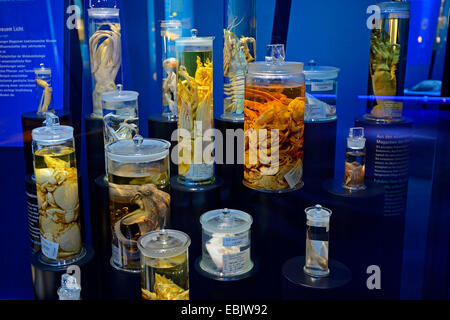 preserved sea animals in glasses in the show cases of an exhibition - Stock Photo