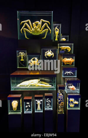 preserved crayfishes in the show cases of an exhibition - Stock Photo