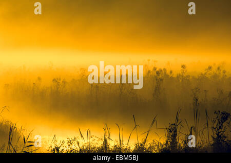 Sunrise on marsh land, near Goose Pond, Linton, Indiana, USA. - Stock Photo