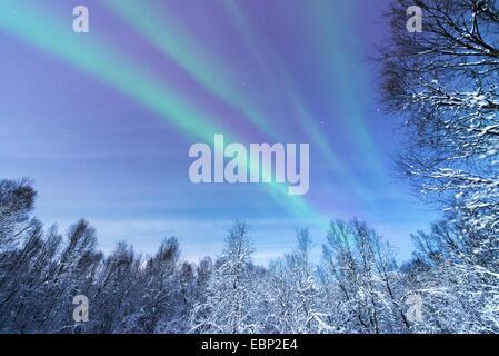 aurora above snowy forest scenery, Norway, Troms, Tromsoe - Stock Photo