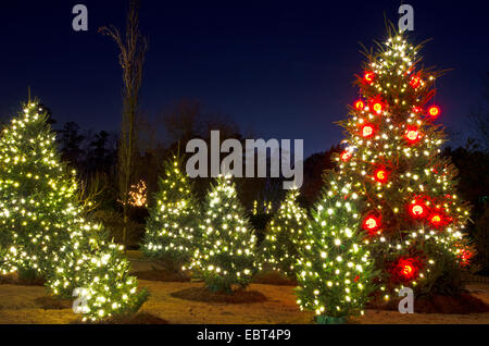 Outdoor Christmas Trees have been decorated with red