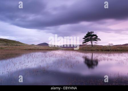 Kelly Hall Tarn at twilight, Lake District, Cumbria, England. Autumn (November) 2014. - Stock Photo