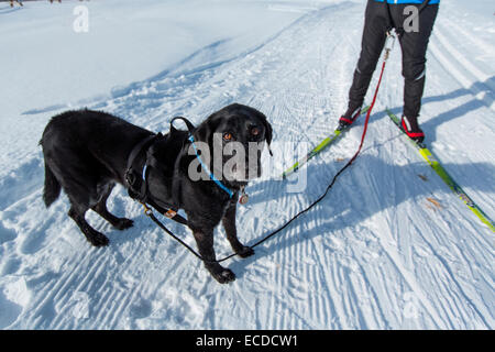 Colorado Cross Country Skiing - Stock Photo