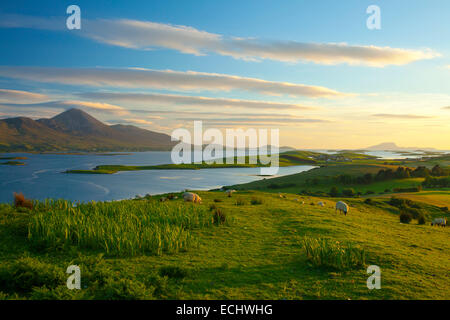 Sheep grazing beneath Croagh Patrick on the shore of Clew Bay, County Mayo, Ireland. - Stock Photo