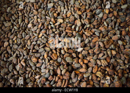 Fermented and dried cocoa beans (Theobroma cacao), Ghana, West Africa Stock Photo, Royalty Free Image: 18350908