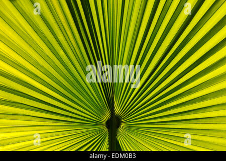 Palm leaves background - Stockfoto